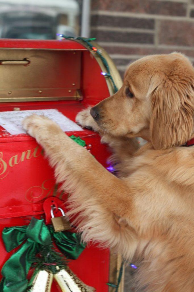 hermosas-imagenes-navidenas-para-iphone-con-perros