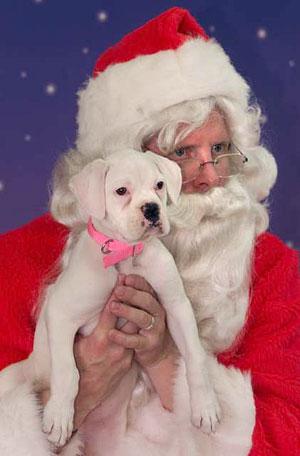 imagen-de-papa-noel-con-un-perrito-para-fondo-de-celular