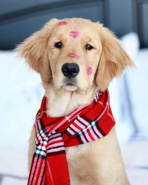 imagen-de-un-lindo-y-tierno-perro-navideno