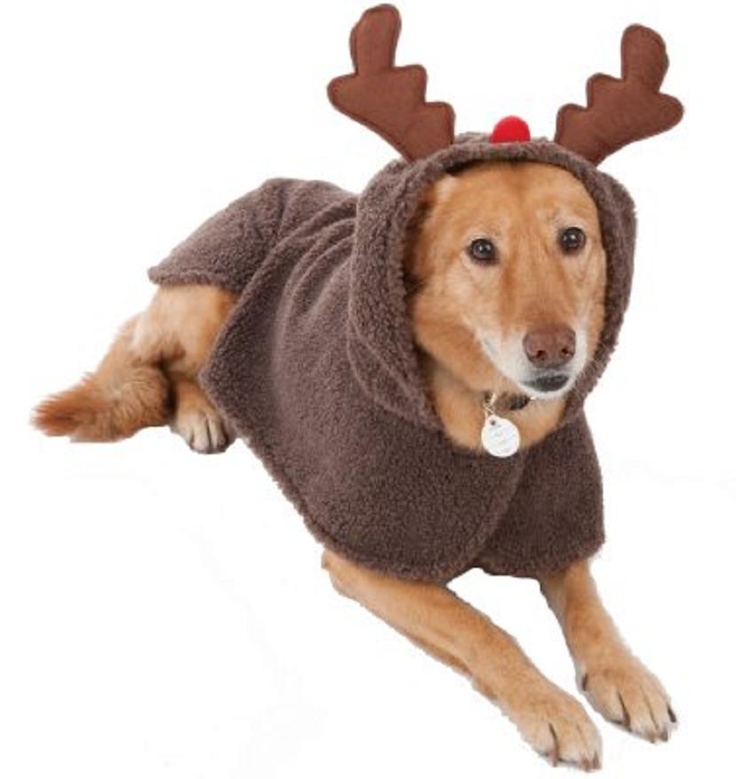 imagen-de-un-perro-con-un-lindo-disfraz-de-reno-de-navidad