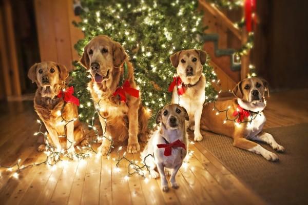imagenes-de-perritos-enredados-en-luces-de-navidad