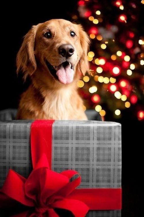 imagenes-de-perritos-junto-al-arbol-de-navidad-y-los-regalos