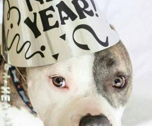Imagenes De Perros Happy New Year Para Facebook