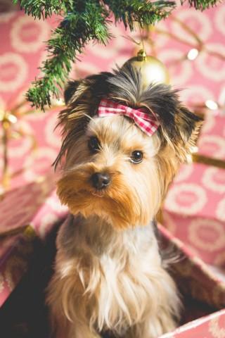 imagenes-de-perros-tiernos-navidenos-para-facebook