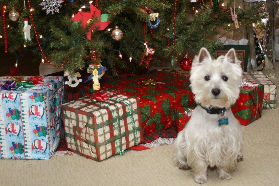 imagenes-de-perritos-al-lado-de-los-regalos-y-el-arbol-de-navidad