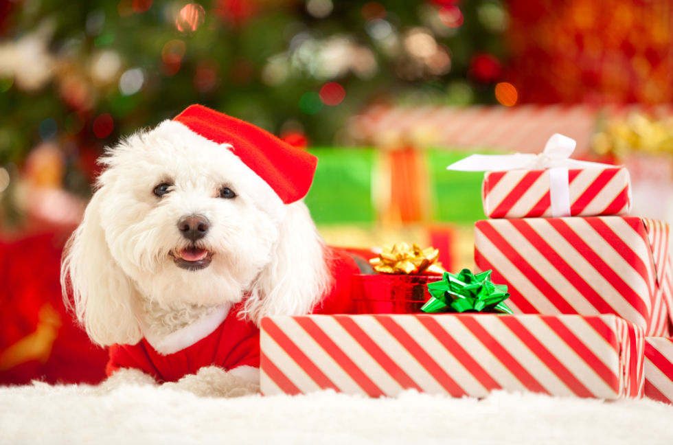 imagenes-de-perritos-para-fondo-de-pantalla-navideno
