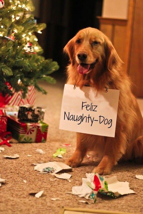 imagenes-de-perros-al-lado-de-los-regalos-y-el-arbol-de-navidad