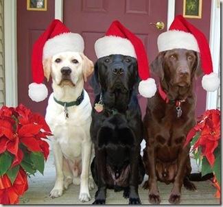 imagenes-de-perros-con-gorros-de-navidad-para-facebook