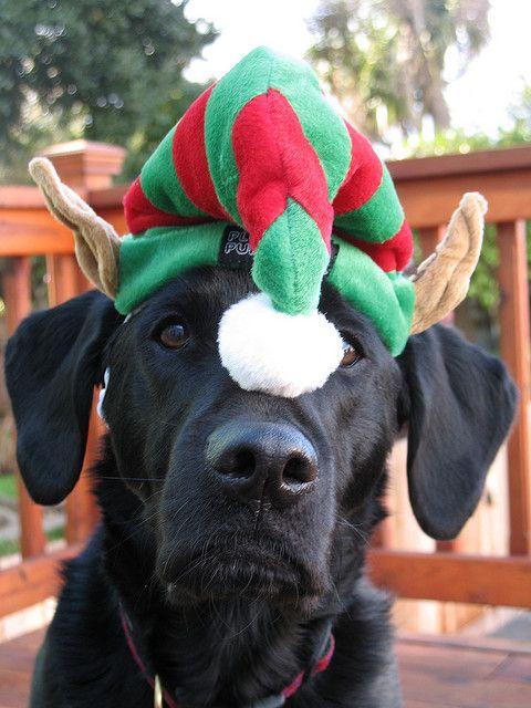 imagenes-de-perros-negros-navidenos-para-colocar-en-el-celular