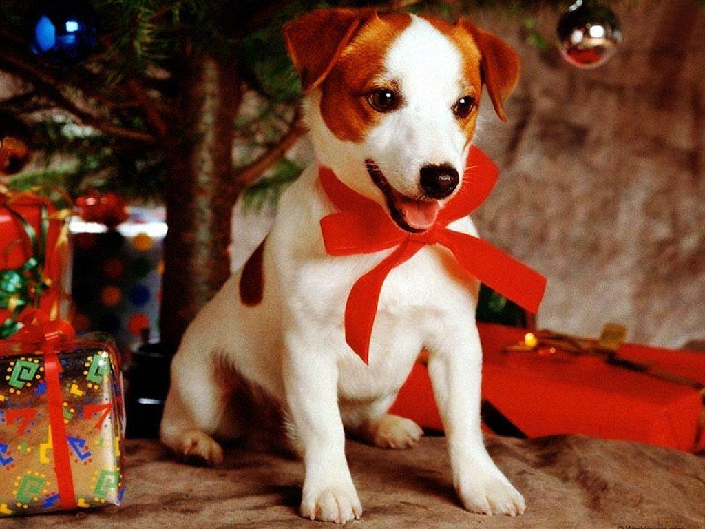 perrito-navideno-junto-al-arbol-y-los-regalos