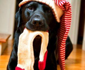 Imagenes De Perros Negros Navideños Para Fondo De Celular