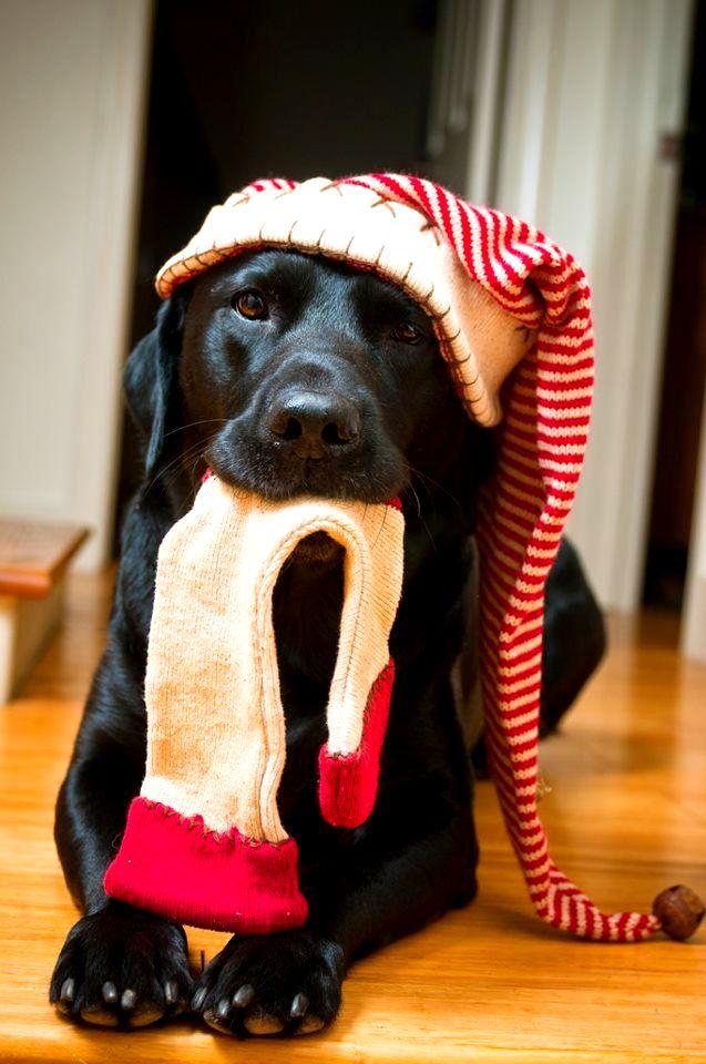 perro-negro-en-navidad-para-el-celular