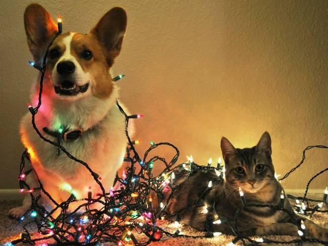 perro-y-gato-enredados-en-luces-de-navidad