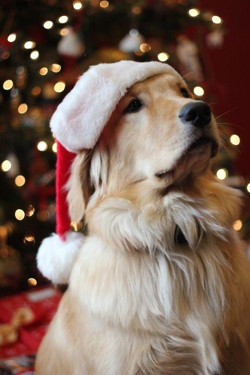 precioso-perro-navideno-para-poner-de-fondo-en-el-iphone