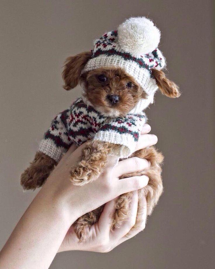super-tierno-perrito-pequeno-para-navidad