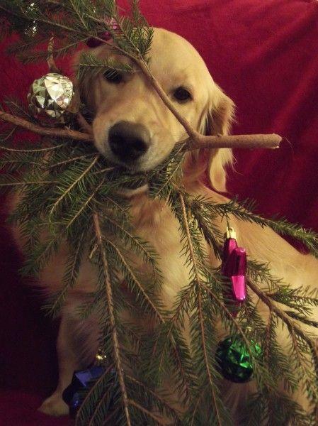 tierna-imagen-de-perritos-en-navidad