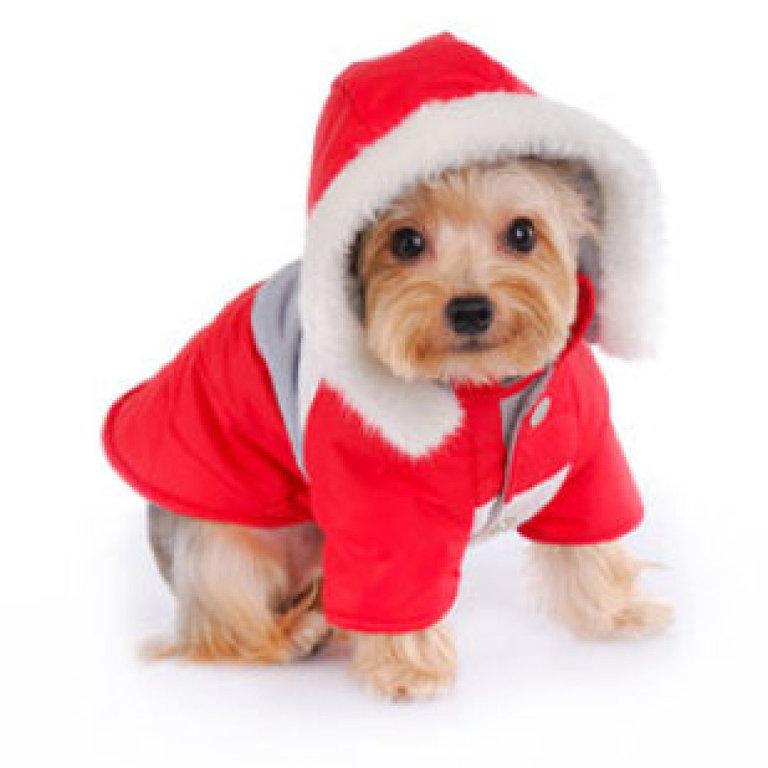 tierno-perrito-navideno-para-descargar