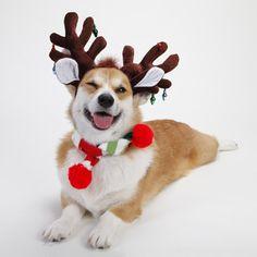 Imagenes De Perros Disfrazados De Renos Navideños