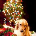 Imagenes De Perritos Junto Al Árbol De Navidad Y Los Regalos