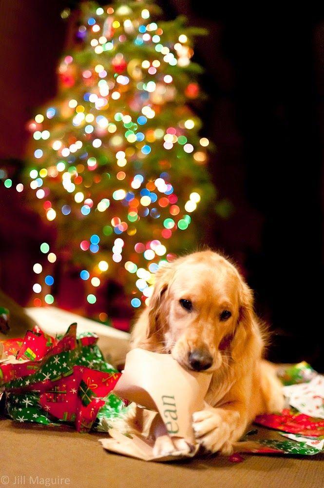 tiernos-perritos-junto-al-arbol-de-navidad-y-los-regalos