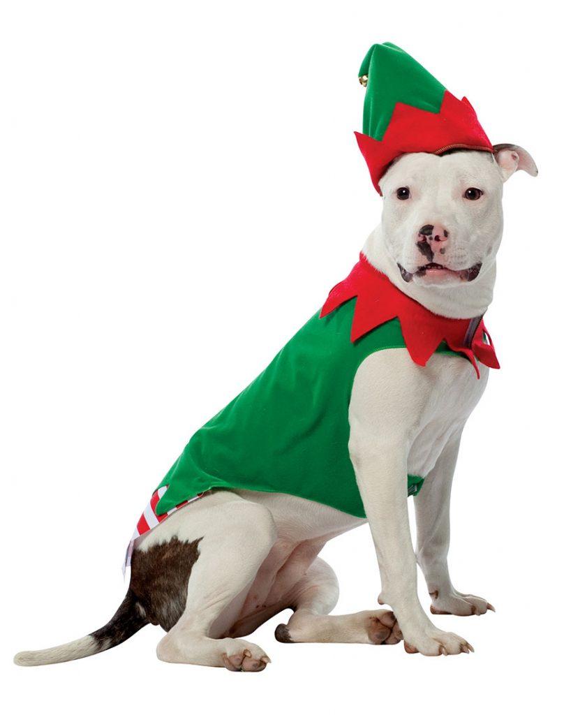 imagenes-de-tiernos-perritos-disfrazados-de-duendes-de-navidad