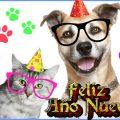 Imagenes Con Perros Para Dar Un Feliz Año Nuevo