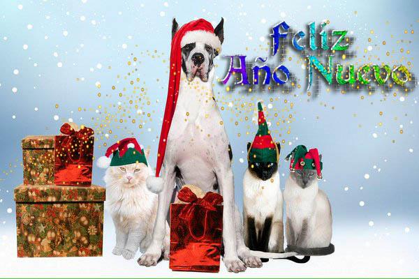 Postal Feliz Año Nuevo con Imagenes De Perros