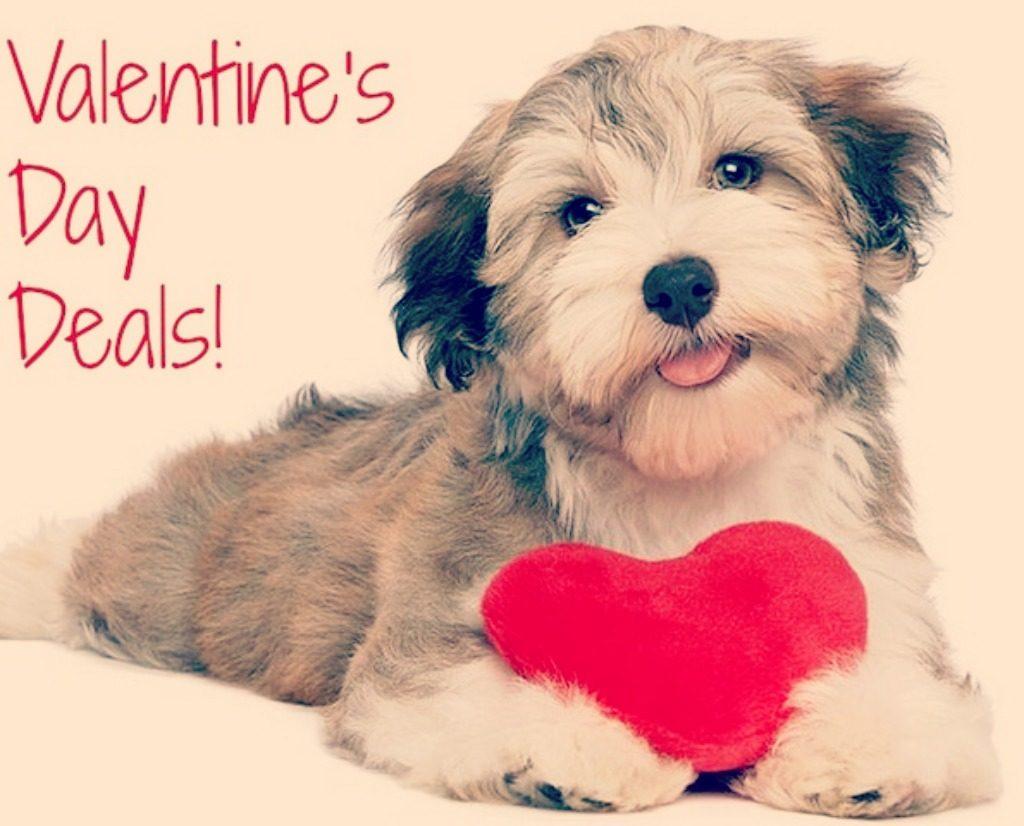 Imagenes de Perritos feliz dia de san valentin