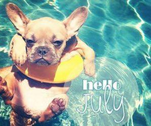 Comparte Imagen Tierna de un Perrito Para Desear Un Feliz Mes De Julio