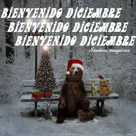 Bienvenido diciembre imagen de perros