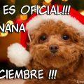 Imagenes De Perros Mañana Es Diciembre Para Enviar