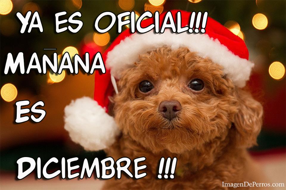 Imagen de un perrito con la frase Ya es oficial mañana es diciembre